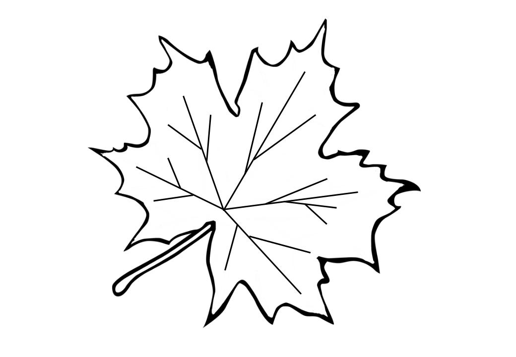 рисунок кленового листа шаблон