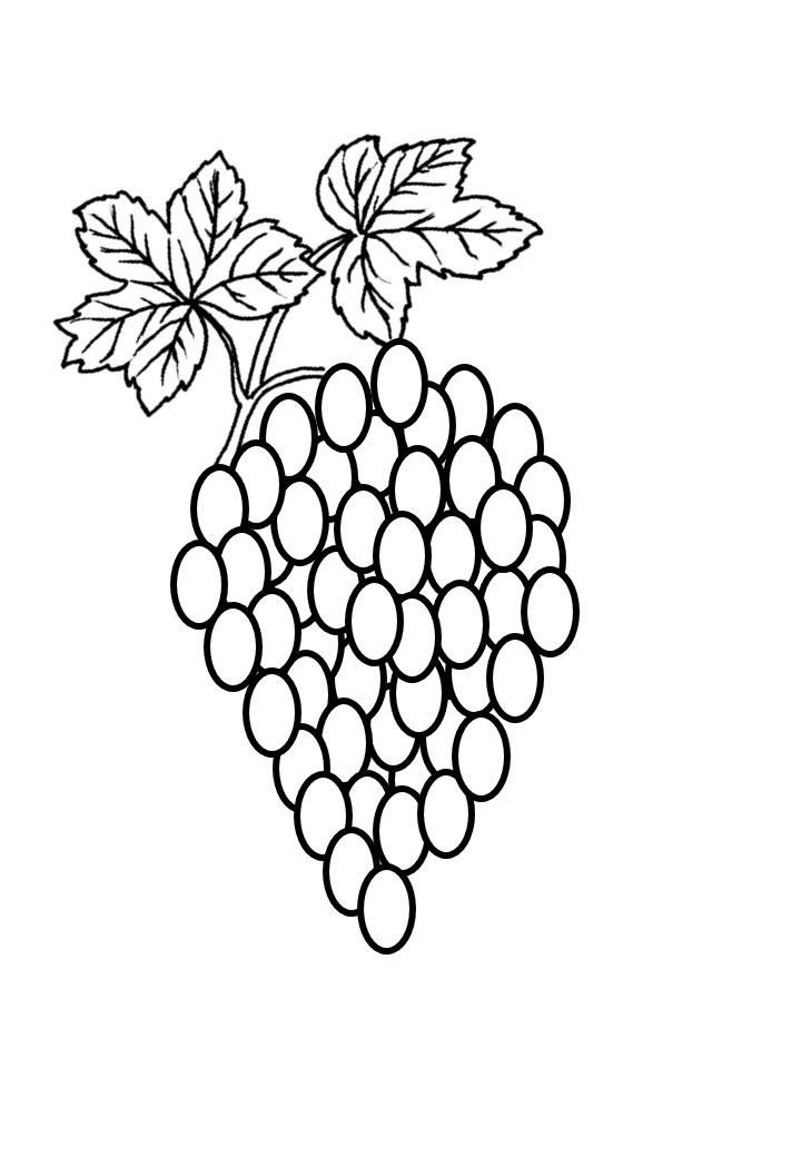виноград раскраска